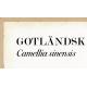 Skolplansch - Gotländsk teplanta (detalj)
