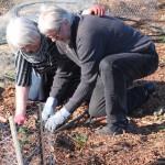 Anneli & Sylve planterar