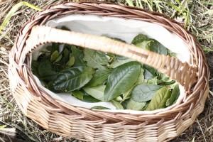 Teblad i korg