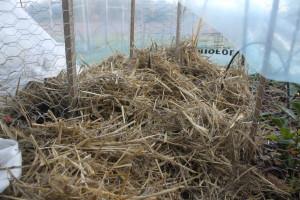 Teplantor täckta av halm och tunnel